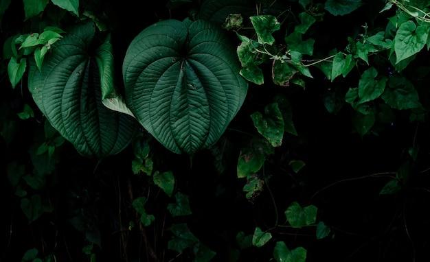 Джунгли листья фон.