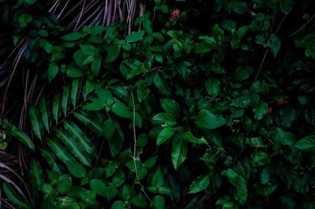 ジャングルは背景を残します。