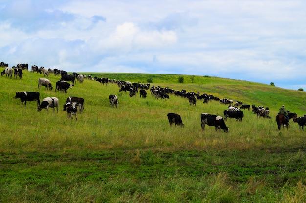 牛の群れが村の牧草地に放牧します。
