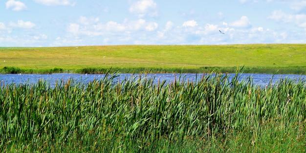 生い茂った池、牧草地の背景に、日陰で前景の葦。