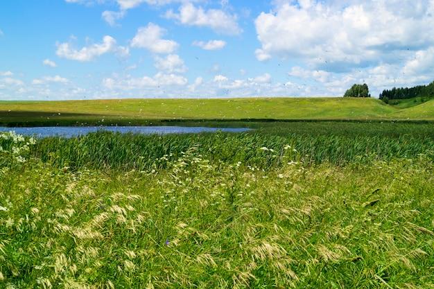 生い茂った池、木と山の背景に、日陰で前景の葦