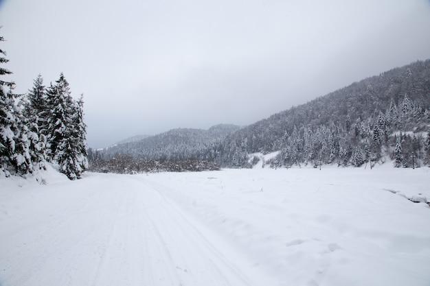 雪のモミの木、美しい冬の山の風景とクリスマスの背景