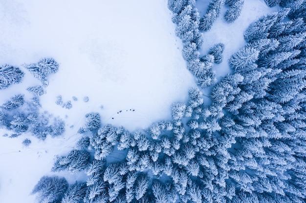 Зимний лес с морозными деревьями, вид с воздуха / вид с воздуха на заснеженные леса /