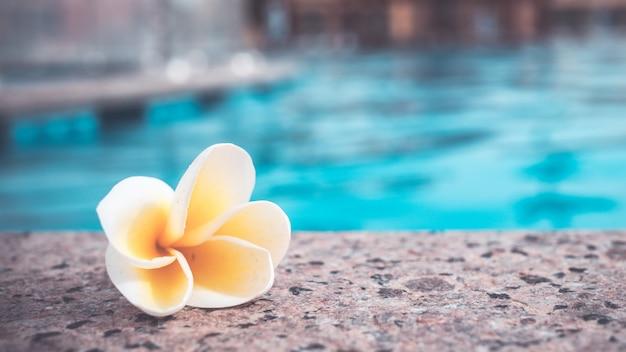 プルメリア、プルメリアの花の床に青いプール
