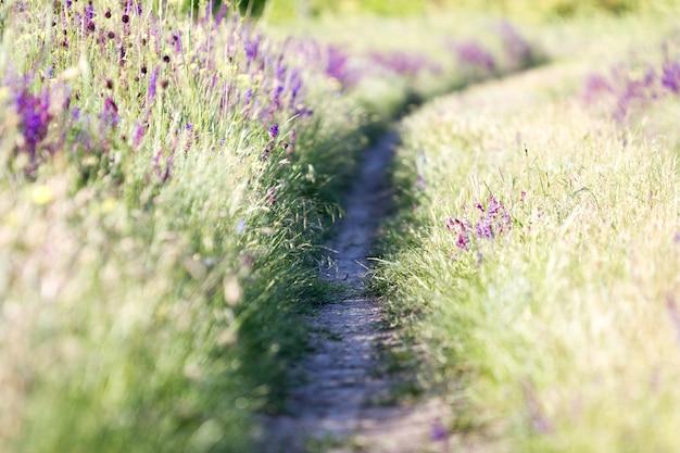 咲く野生の花 - 草原の花。ぼかしの背景を持つ美しいフィールド