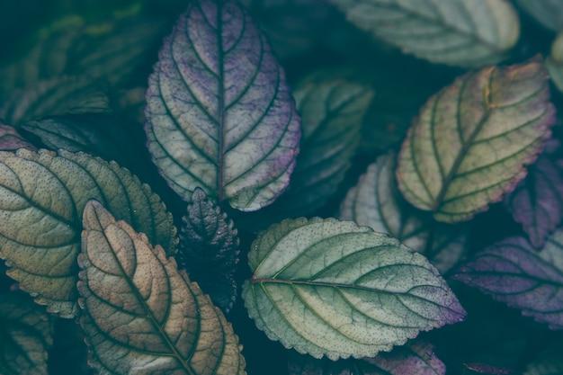 緑の美しい植物のトロピカルホリデー旅行の背景熱せられた旅の調子を整える