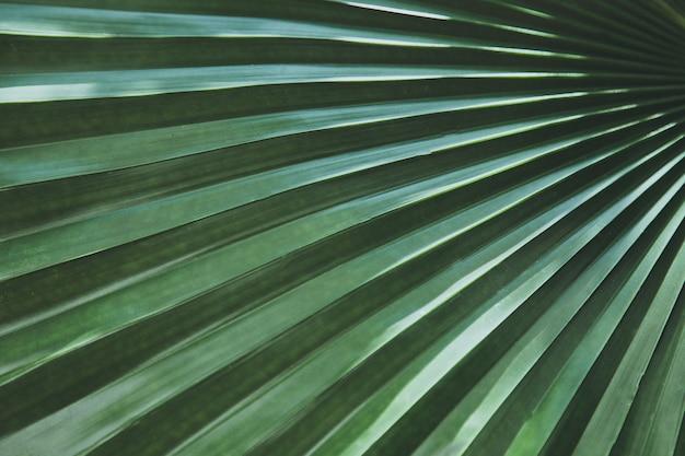 緑の手のひらに手を挙げろ熱帯の休暇旅行の背景熱効果の旅トーンのまま