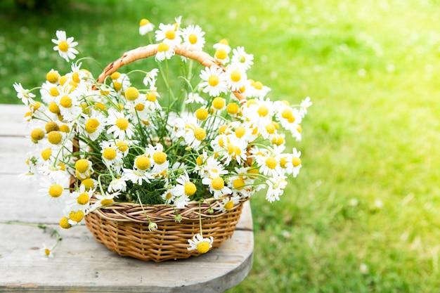 かごの中のデイジーの花。庭でカモミール付きバスケット。