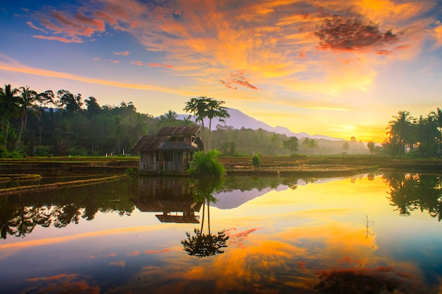 北ベンクルインドネシアの田んぼで朝の空