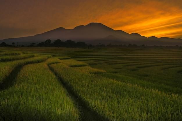 高山と美しい雲のあるインドネシアの田んぼでの朝の美しさ