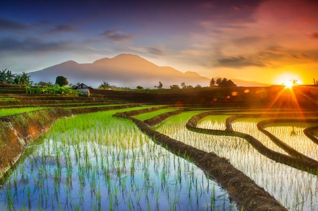 アジアの日の出と緑の朝露のあるインドネシアの農村地域の田んぼと山の自然のポートレート