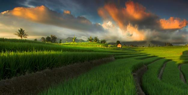 Прекрасный вид на рисовое поле с невероятным небом