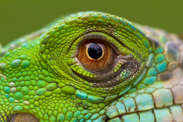 幻想的な緑のイグアナの目のマクロ