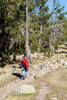 Вид сзади рюкзаком женщина, идущая по лесной тропе