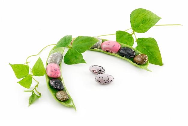 種子と葉を白で隔離される熟したインゲン豆