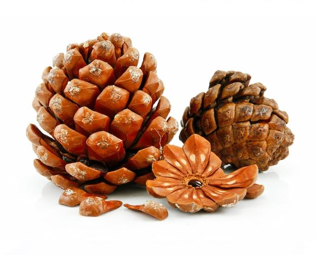 Орехи и шишка сибирской сосны на белом фоне