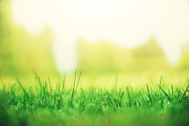 太陽と新鮮な緑の春の草は効果をリークします。抽象的な自然の背景。バナー
