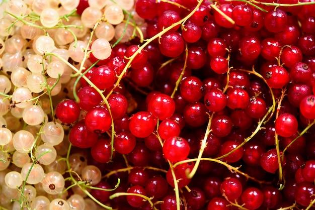 赤と白のスグリの実の背景。ビーガンとベジタリアンのコンセプトです。夏の健康食品