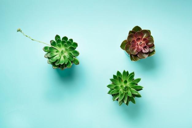 青い背景に緑のエキゾチックな多肉植物のパターン。平らに置きます。上面図。ポップアートデザイン、創造的な夏のコンセプト。最小限のスタイル
