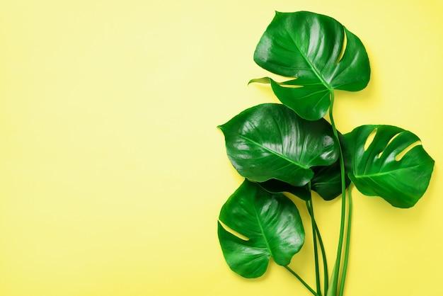 緑のモンステラは黄色の背景に残します。最小限のデザイン。エキゾチックな植物創造的な夏の平干し。ポップアートトレンド