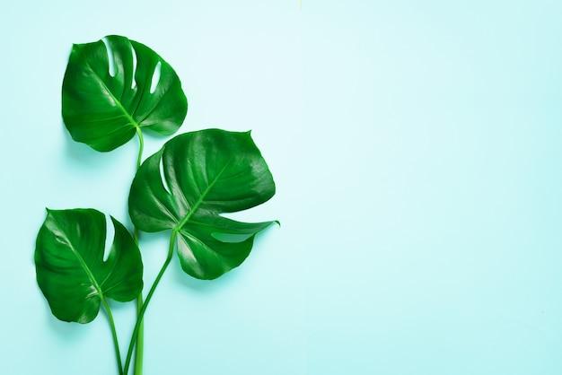 緑のモンステラは青い背景に残します。最小限のデザイン。エキゾチックな植物創造的な夏の平干し。ポップアートトレンド