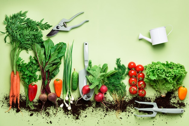 Органические овощи и садовые инструменты. вид сверху. морковь, свекла, перец, редька, укроп, петрушка, помидор, салат.