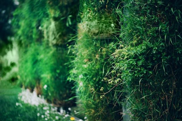 緑の壁。エコフレンドリーな垂直ガーデンコンセプト。自然、夏、春、庭のコンセプト