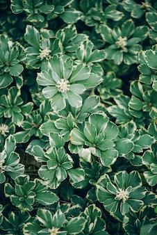 自然の概念。上面図。緑の葉のクローズアップ。熱帯の葉。