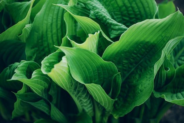 緑の葉のクローズアップ。熱帯の葉。上面図