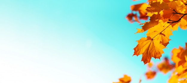 Золотая осень концепция с копией пространства. солнечный день, теплая погода.
