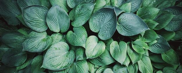 自然の概念。上面図。緑の葉のテクスチャです。