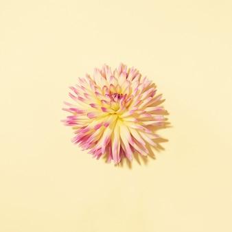 パステル調の背景に黄色のダリアの花
