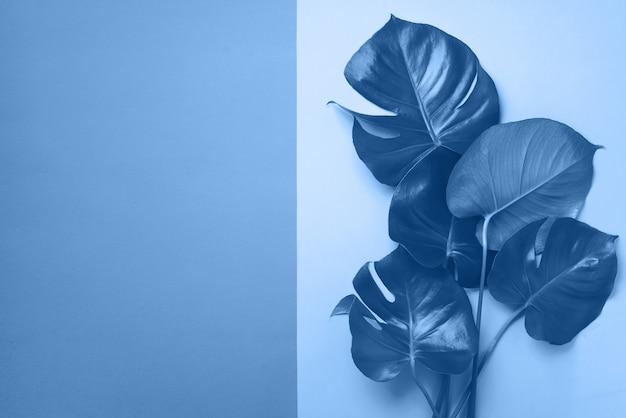 コピースペースとモノクロの背景に緑のモンステラを葉します。トレンドのブルーと落ち着いたカラー。エキゾチックな植物。創造的な夏のフラットが横たわっていた。ポップアートのトレンド。