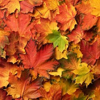 赤、オレンジ、黄色と緑のカエデの葉の背景。