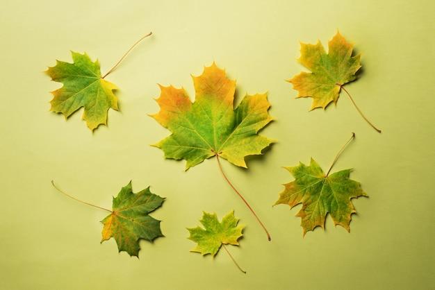 コピースペースと緑の背景に紅葉。