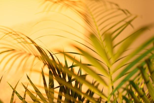 夏の旅行のコンセプトです。エキゾチックなヤシの葉の影がパステル調の黄色の壁の背景の上に敷設されています。