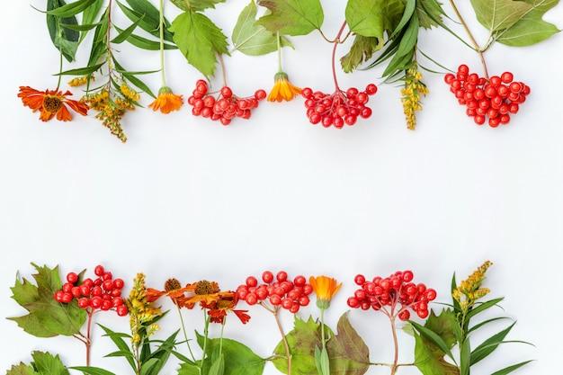 秋の植物ガマズミの果実、白い背景の上のオレンジと黄色の花で作られた秋コンポジションフレーム