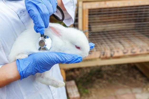 Ветеринар женщина с стетоскоп холдинг и изучения кролика на ранчо крупным планом. кролик в ветеринарных руках для проверки в естественной эко-ферме. уход за животными и концепция экологического земледелия.
