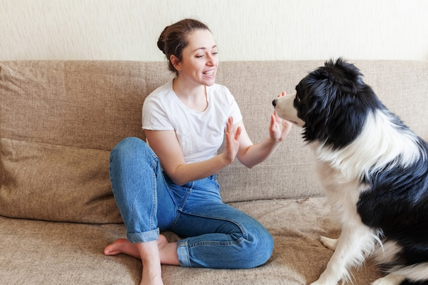 安全な家にいます。室内のソファの上のかわいい子犬犬ボーダーコリーで遊んで笑顔の若い魅力的な女性。家族ペットケア動物生活検疫コンセプトの新しい素敵なメンバーを抱きしめる女の子