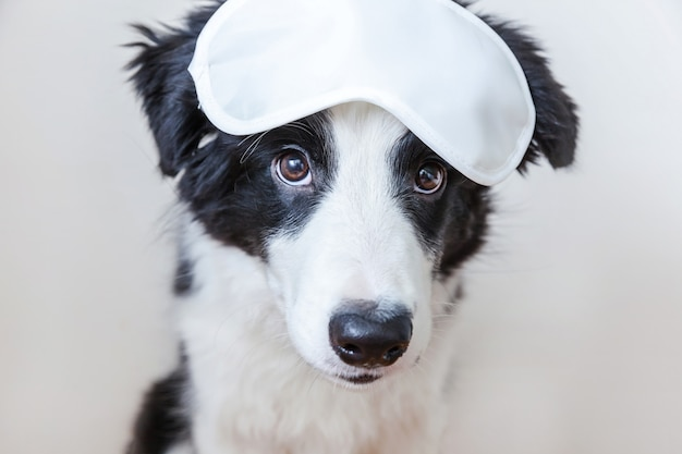 分離された眠っているアイマスクと面白いかわいい笑顔子犬犬ボーダーコリー