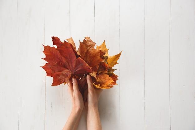 女の子は白い背景の上の赤い色落ちたカエデの葉を持っています。
