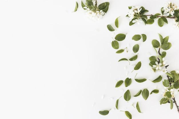 Весенняя композиция. зацветая груша весны разветвляет на белой стене, флористической рамке, взгляд сверху, плоском плане. концепция весны
