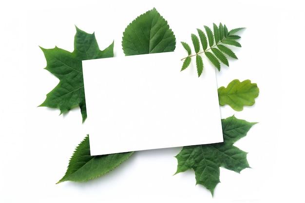 白で隔離される秋のモックアップ緑葉