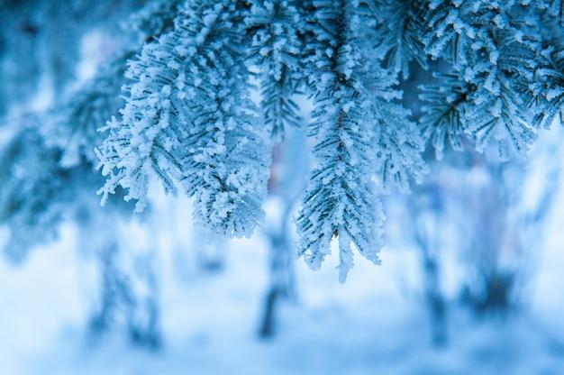 ウィンターパークのスプルースの木の美しい雪に覆われた枝