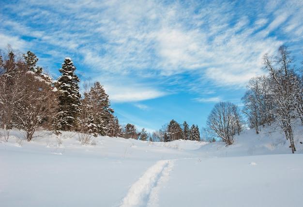 雪のモミの木とクリスマス