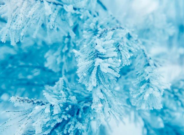 白い冬の凍結針葉樹の雪に覆われた枝