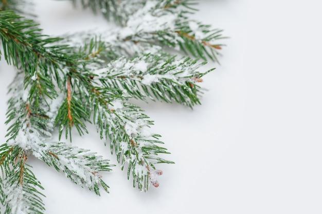Рождественская заснеженная ветка на белом для поздравительной открытки