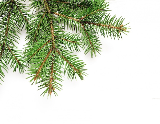 分離された白でモックアップクリスマスツリーの枝の境界線