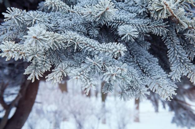 雪に覆われたクリスマスツリーの背景色
