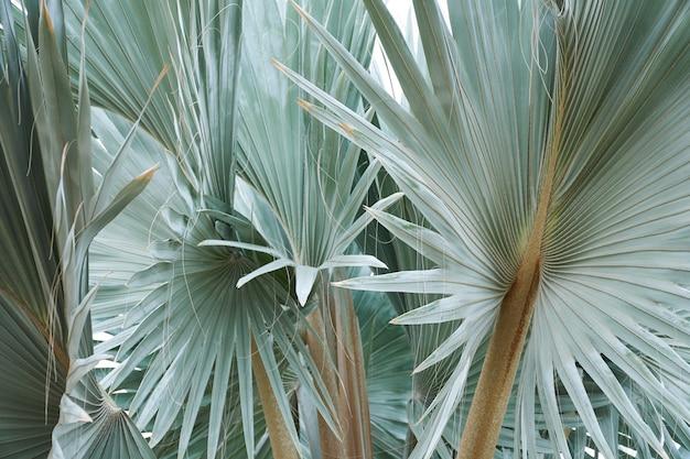 美しい熱帯の緑の葉